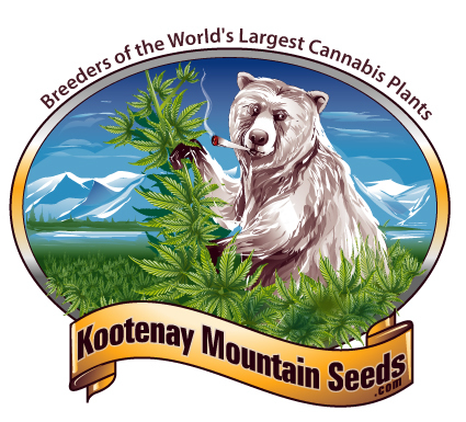 white grizzly cannabis seeds